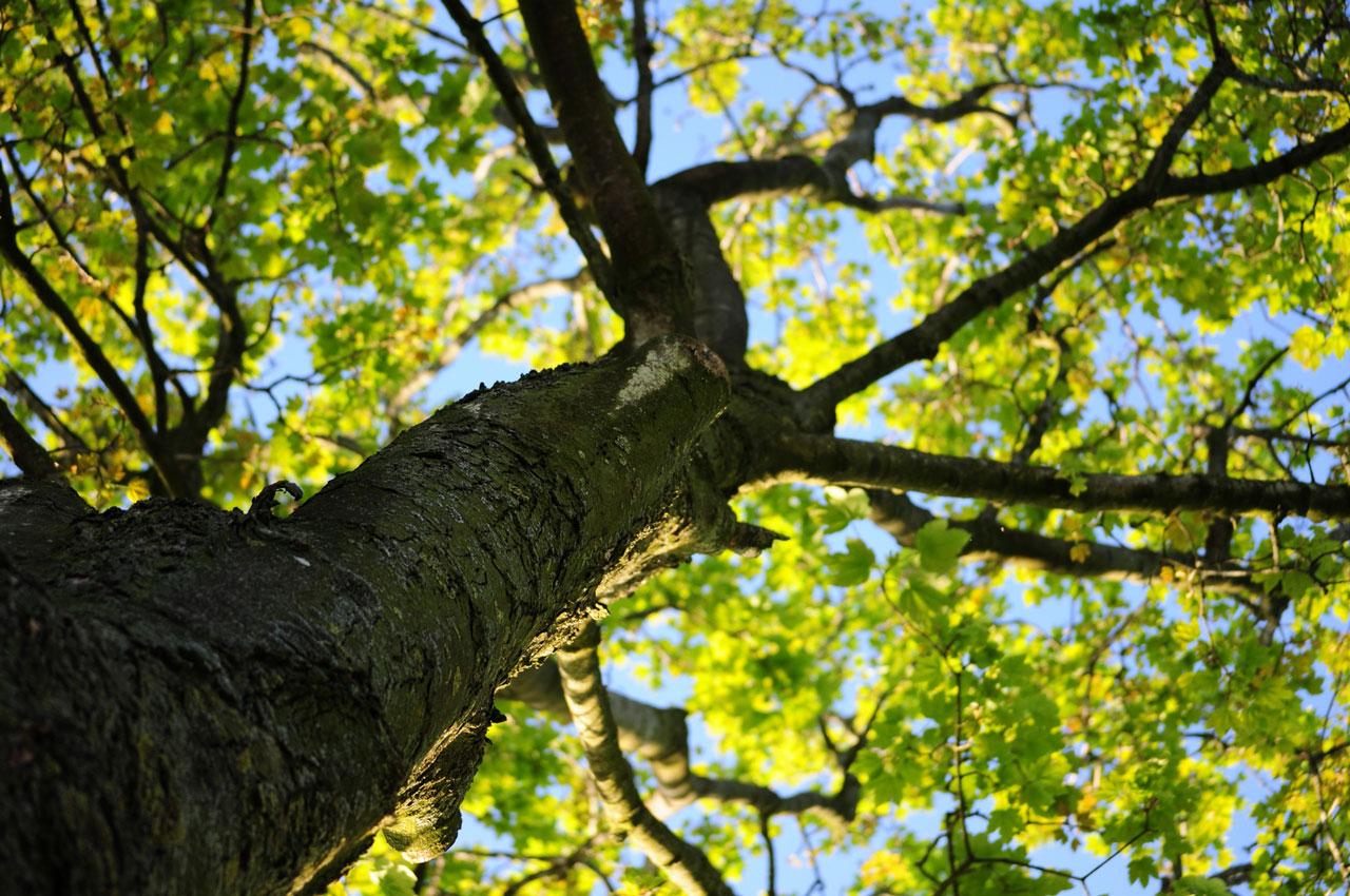 wood-nature-leaves-tree-2